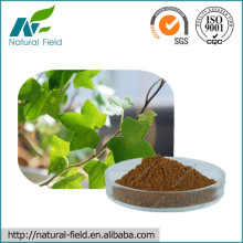 100% Natural Dried Ivy Leaf Extract Hederagenine 1%,3%,5% Manufacturer