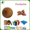 Fashionale Coleus forskolin extracts, with 10%, 20% ,40% and 98% forskolin