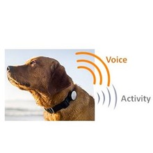 #AW87308 Smart Phone controlled activity tracker Pet Collars