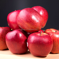 Chinese Fresh Huaniu apple competitive price fresh apple exporter in China fresh style fresh red delicious apple