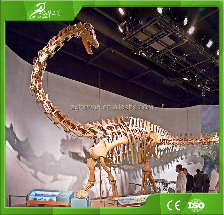 Indoor museum animated lively fiberglass dinosaur fossil replicas dinosaur skeleton