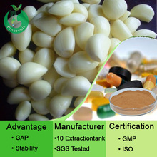 GMP Factory Supply Natural Garlic,Garlic Extract Allicin Powder
