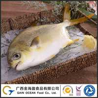 BRC and FDA Certification whole fish farm raised frozen pompano