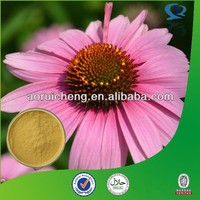 Best Price polyphenols 4% Echinacea Extract