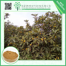 Healthcare product Loquat leaf Extract powder Ursolic acid 25% TOP grade