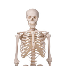 168 CM HUMAN SKELETON MODEL WITH PAINTED SKULL
