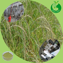 Oat seedlings extract powder In stock with free sample Oat milk powder