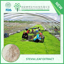 China herbal extract Natural Stevia Extract 90%-95% HOT sale