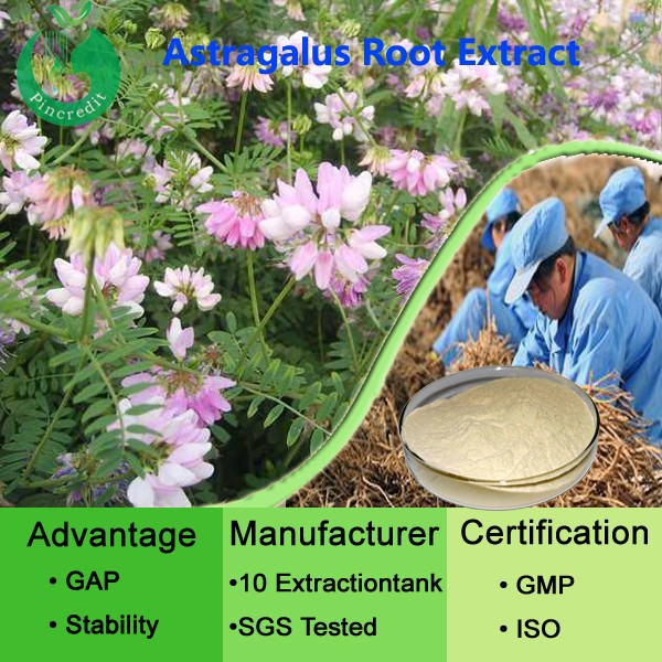 GMP astragalus polysaccharides 70% Astragalus extract