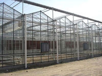 Crops in greenhouse for sale