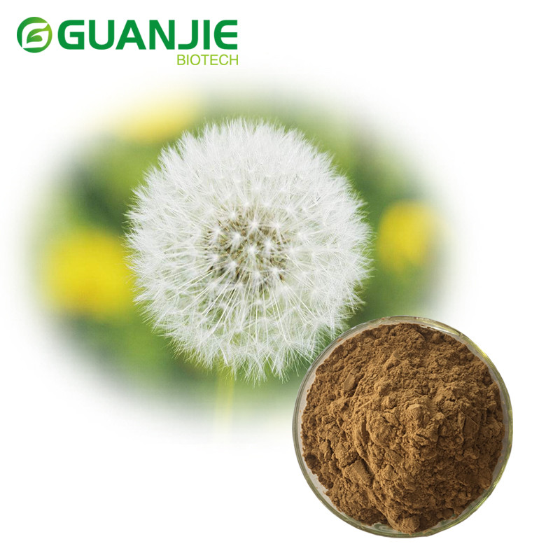 Factory Supply Hot Herb Extract Dandelion Root Extract Dandelion Extract