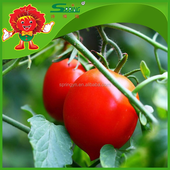how are fruits healthy is tomato a fruit