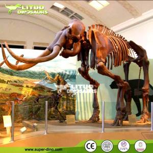 Life Size Replica Prehistoric Animal Skeleton Model for Sale