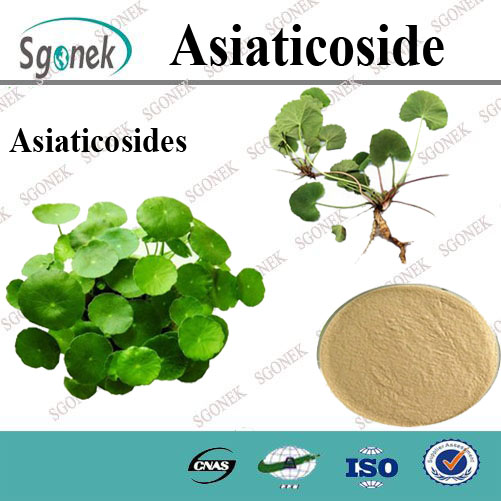 Best quality natural gotu kola extract asiaticoside