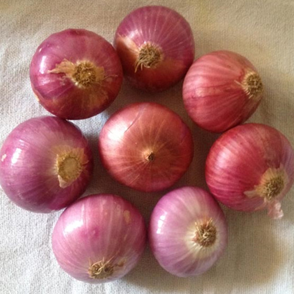2016 Hot sale hybrid onion seeds