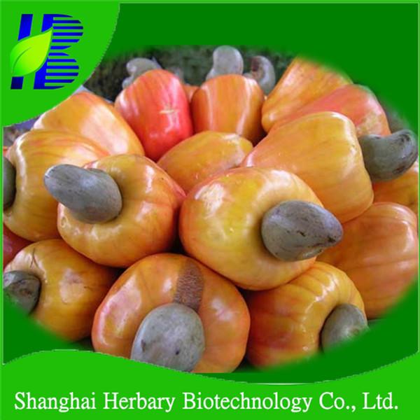 3 Cashew Nut Seeds Anacardium occidentale germinated with seasoned seeds.