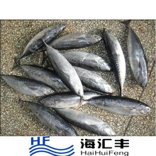 China export seafood fish wholesale frozen skipjack whole round, sea food frozen skipjack tuna price