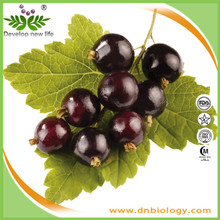 Natural Black currant powder Anthocyanidins 5%-25%/Blackcurrant Extract powder