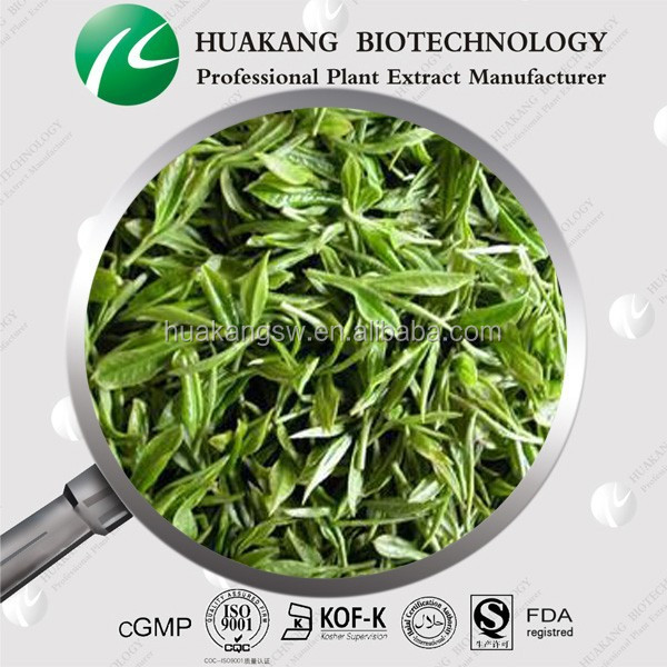 Green Tea Extract Powder Green Tea P.E-Tea Theanine, polyphenol, EGCG, Catechin, Anti-oxidant CADY