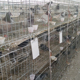 Good design pigeon breeding wire cages size design