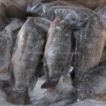 High Quality Frozen Tilapia Whole Round Wholesale Price 800-1000g