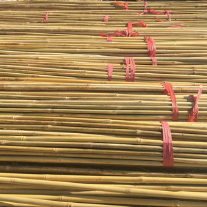 Clean yellow nice looking raw moso bamboo poles cane