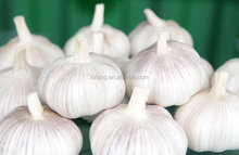 2015 chinese red fresh garlic 500g for hot selling