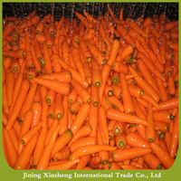China new season carrot export