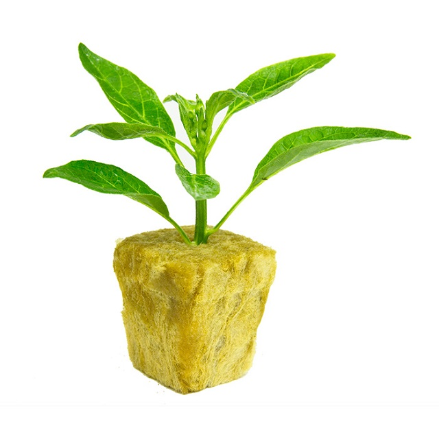 Skyplant Hydroponic Rockwool Cube with Hole for Seedling