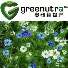 black seed extract/Black Caraway extract