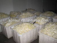 Automatic Bean Sprout Making Machine