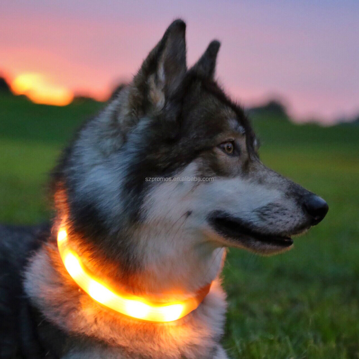 discount led dog collar and leash