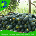 Hot sale seedless f1 watermelon seed for growing