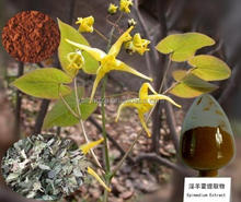 Organic Epimedium Extract Powder