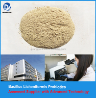 BL5000(500 billion) Bacillus licheniformis Probiotics in Bacillus