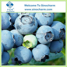New Crop Frozen Blueberry For Juice