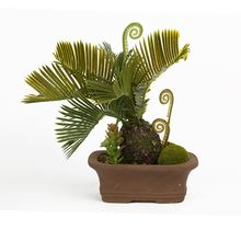 New arrival super quality artificial exotic sago cycas plant