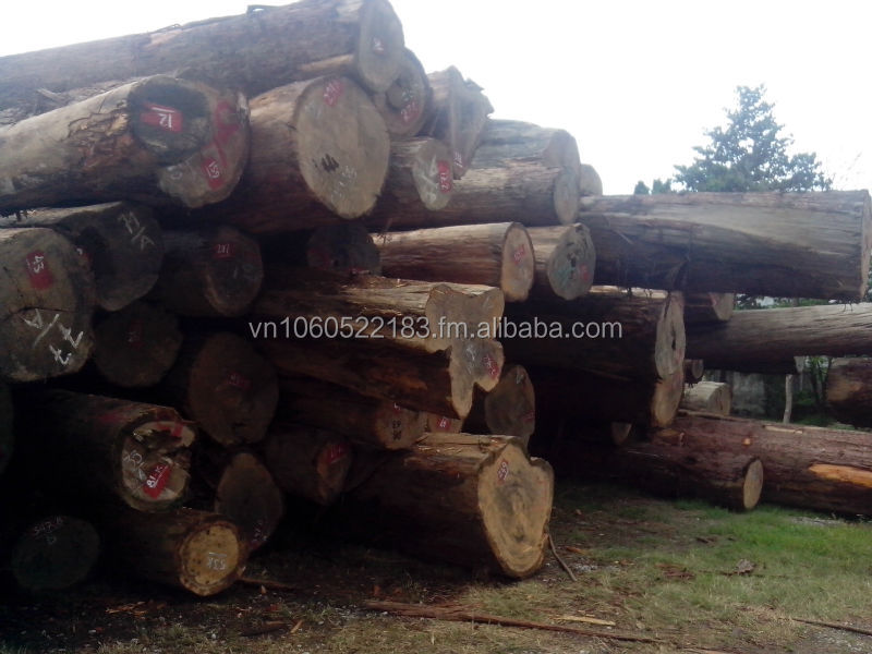 FUJIAN CYPRESS ROUND LOG - HINOKI - POMU WOOD
