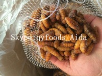 frozen protein nutrition silkworm food