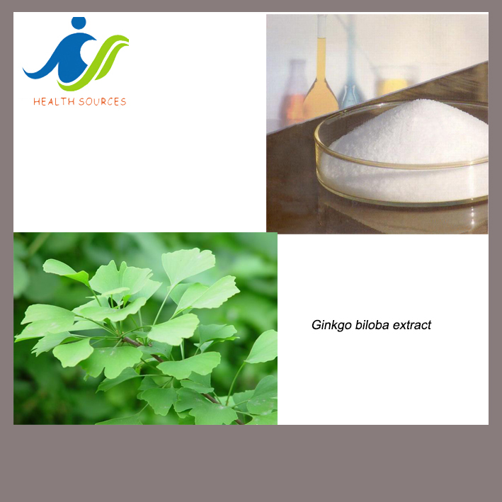 pure ginkgo biloba extract powder with 24% Ginkgo Flavone Glycosides