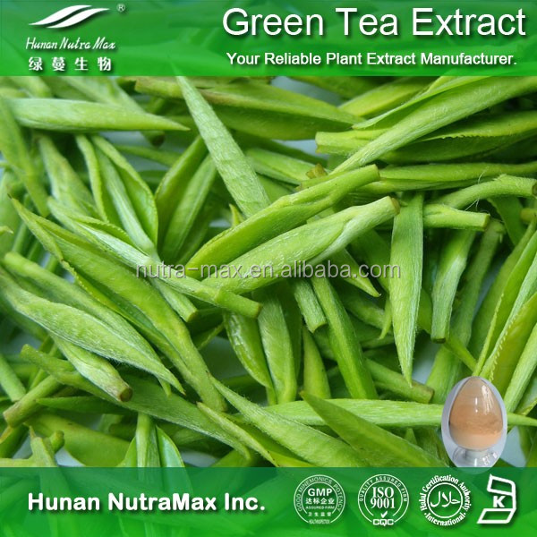 Weight Loss Ingredients Green Tea Extract Powder Price