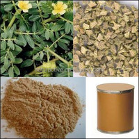 Total Saponins 20%-80% of Tribulus Terrestris Extract Powder