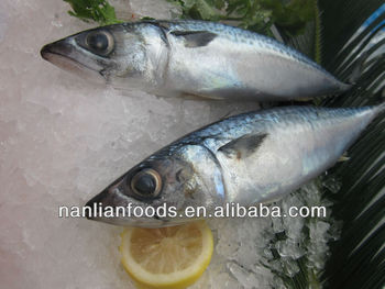 A grade mackerel for frozen fish importers