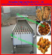 dates/ olive size separating/ separator machine
