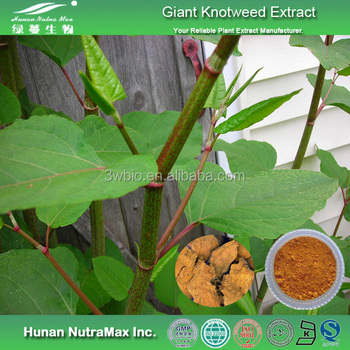 Nutra Max Supply Giant Knotweed/,Polygonum cuspidatum Extract, Resveratrol