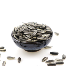 Chinese sunflower seeds type 363/5009 long type with competitive price