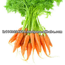 100% Natural & Fresh Carrot Seed Oil