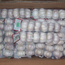 Liliaceous Vegetabless Product Type and Fresh Style Fresh Natural White Garlic