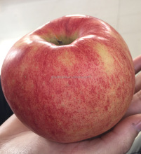 Red Shandong Yantai Fuji Apple-delicious