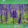 100% Natural Lavender Extract, Lavender Extract Powder, Lavender Herb Extract 4:1 5:1 10:1 20:1
